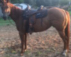red_saddle.jpg