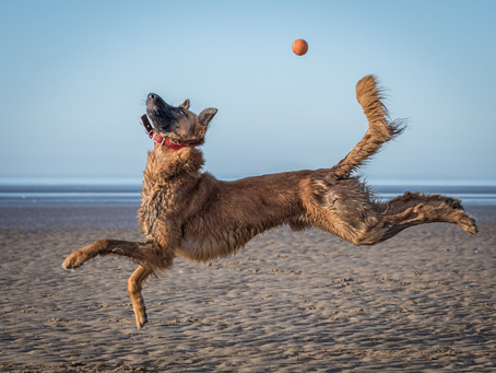 Two Photos Shortlisted for Comedy Pet Awards 2021