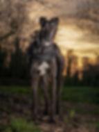 4_Jeannie at Sunset.jpg