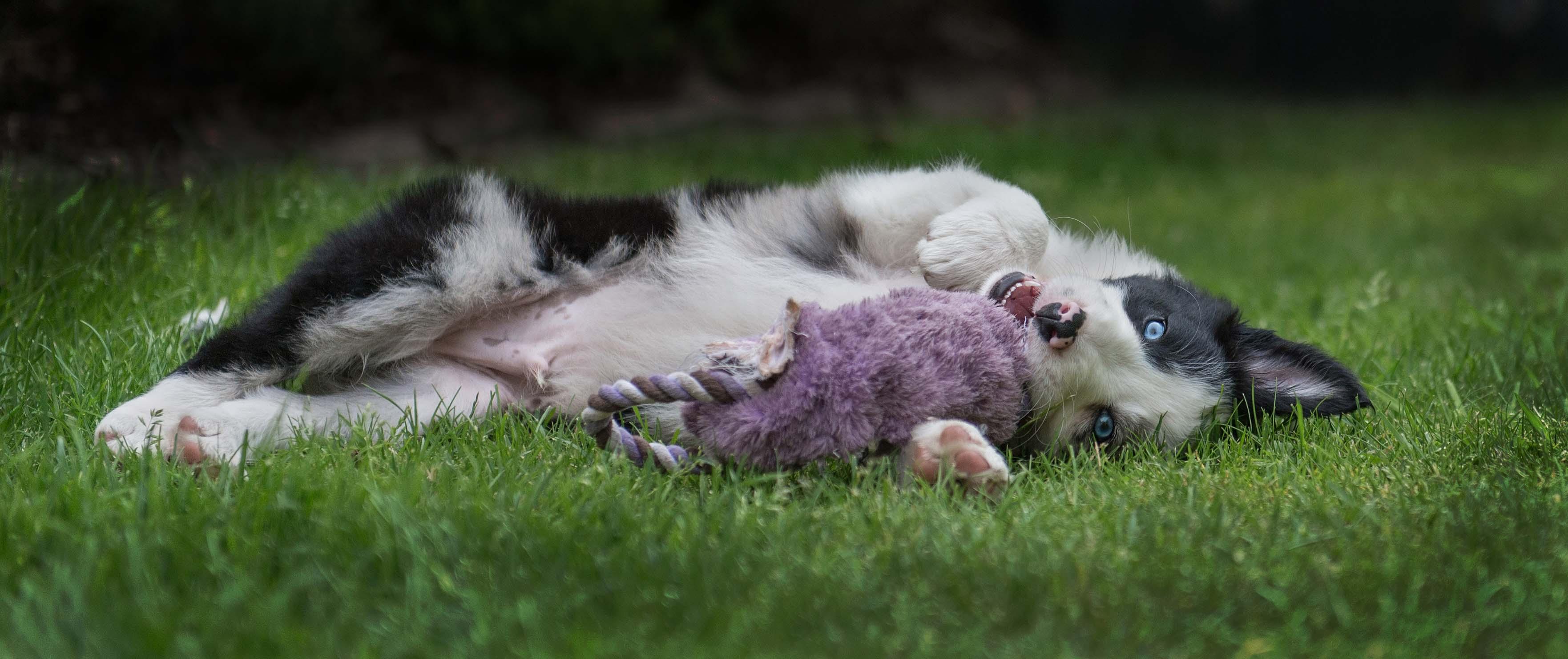 Cute Puppy.jpg