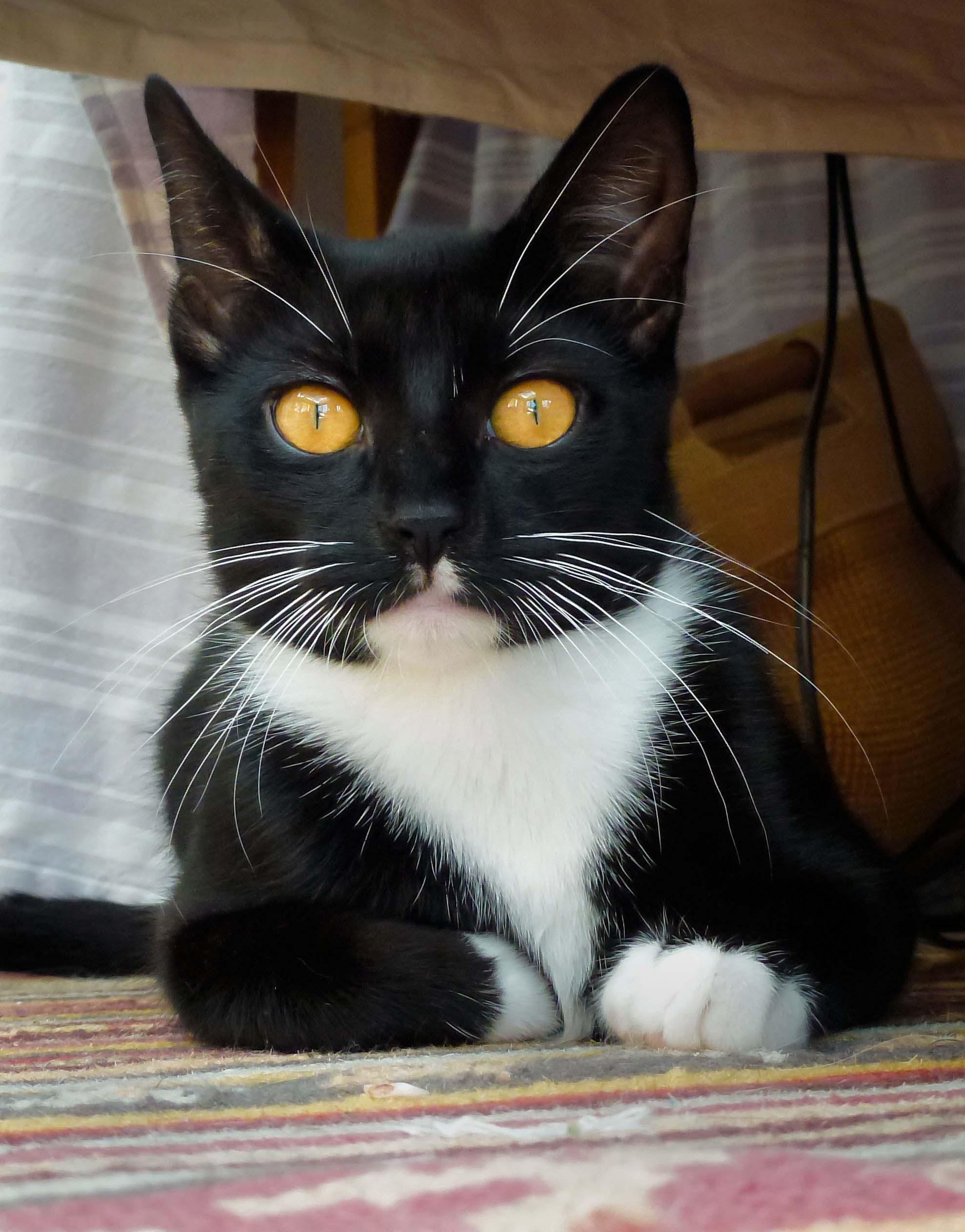 Cats Eyes.jpg