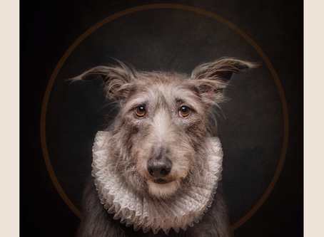 I have just won the Portrait section of The International Pet Photographer of the Year! https://www.