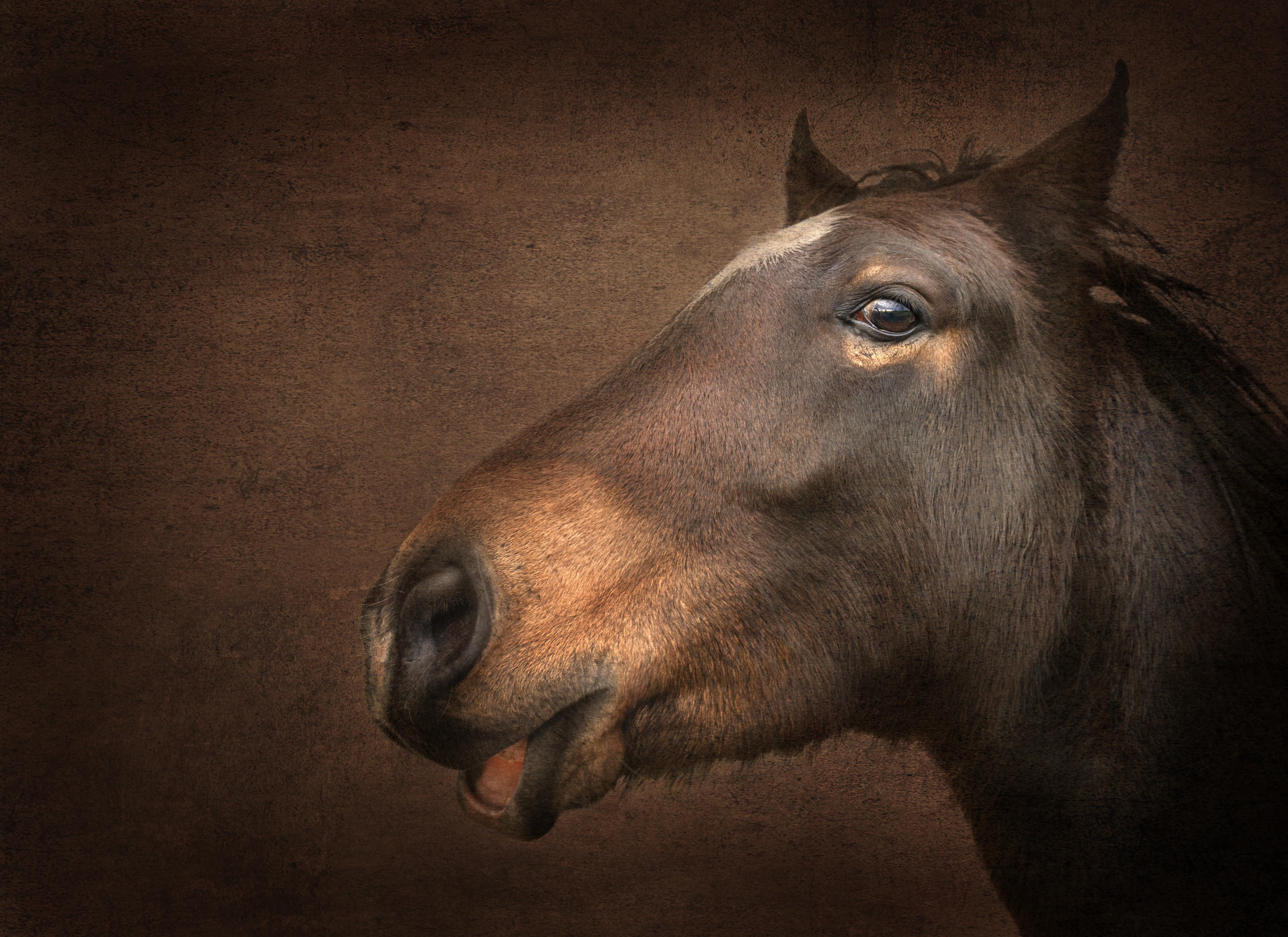 Happy Horse copy