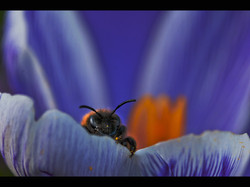 Spring Bee.jpg