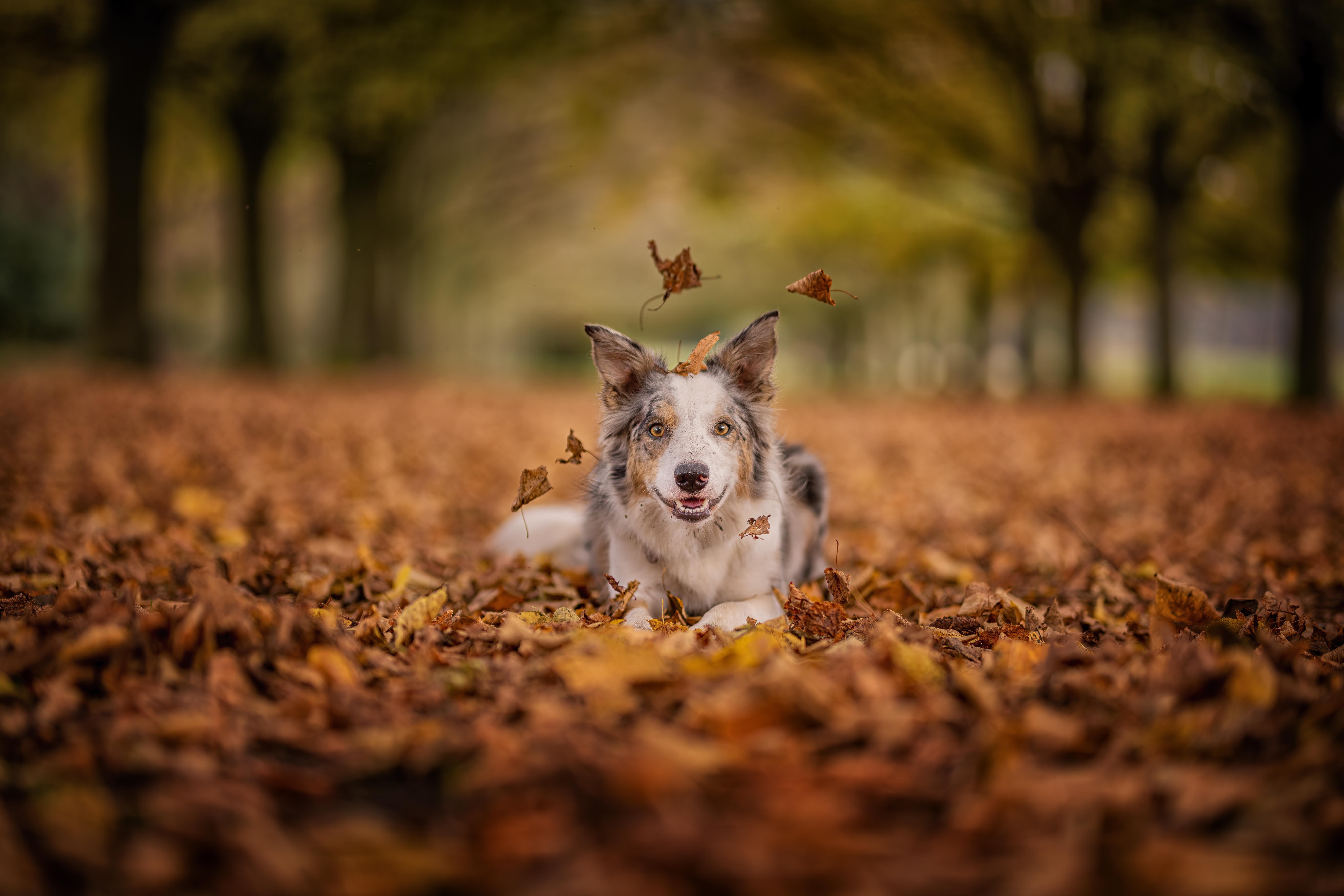 Leafy Passage