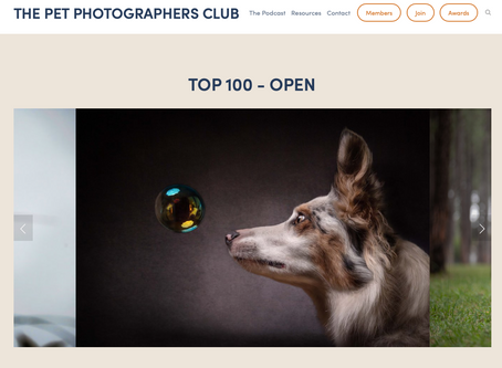 Three photos shortlisted for 2019 International Pet Portrait Awards