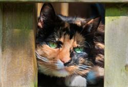 Cool Cat.jpg