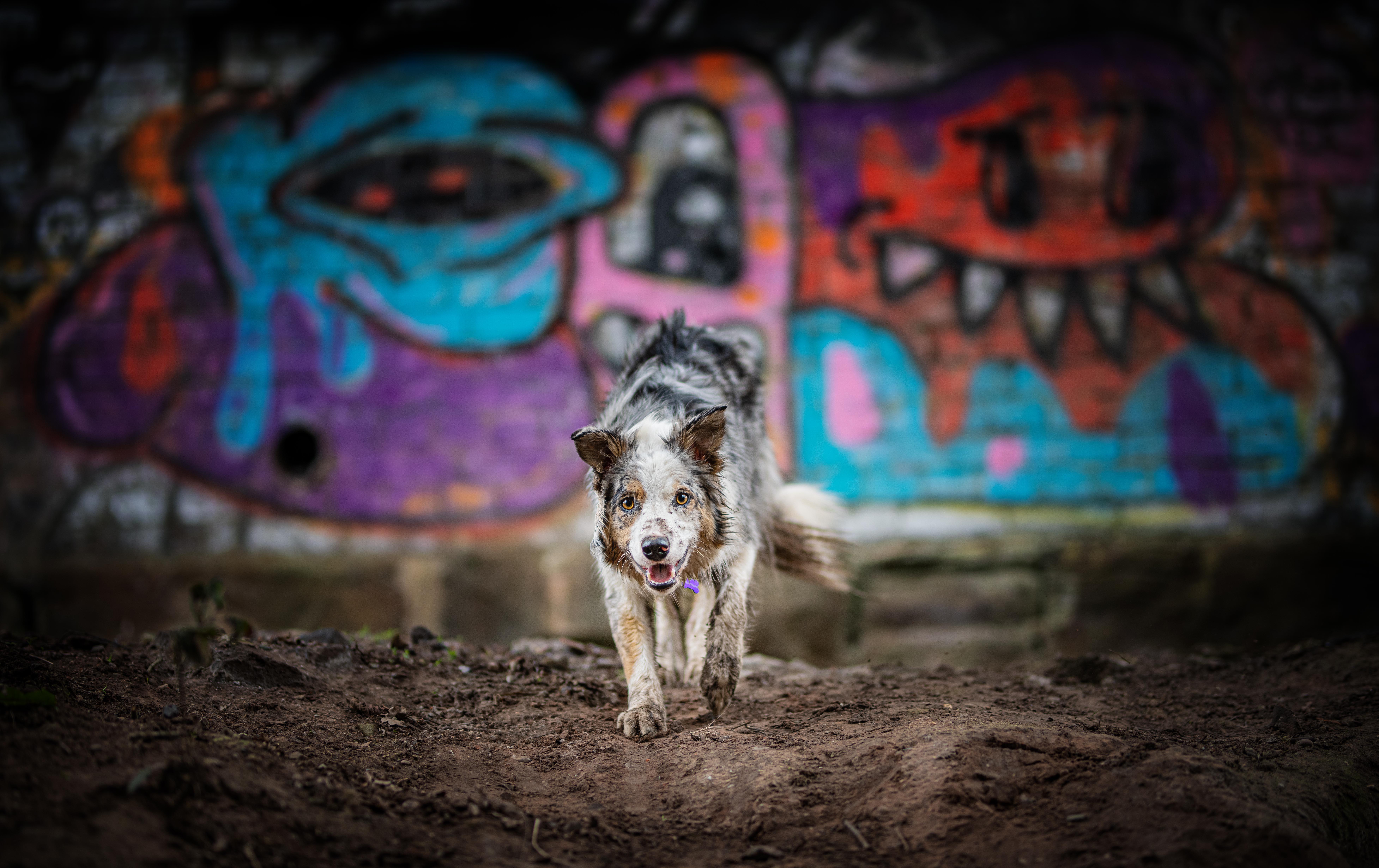 Graffitti Dog copy