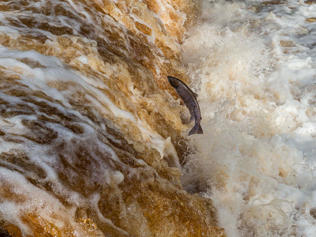 Three photos shortlisted for Wildlife photographer of the Year 2015