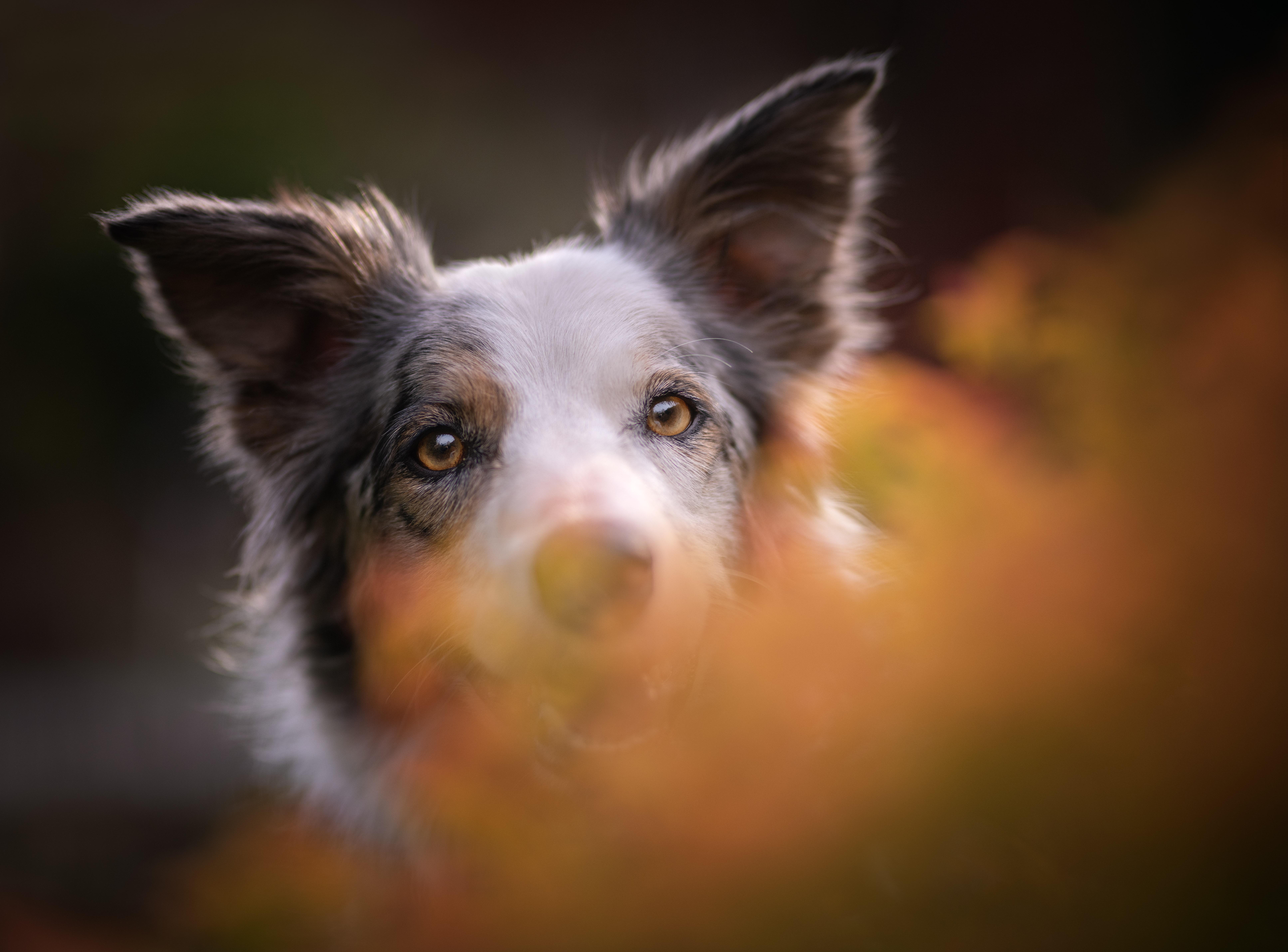 Peeking Dog