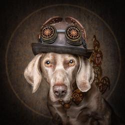 steampunk Omar