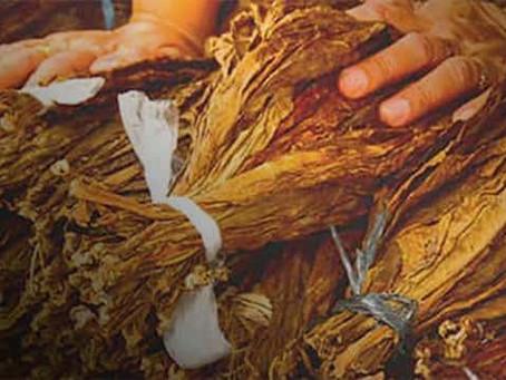 Les effets bénéfiques du tabac