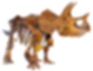 1920px-LA-Triceratops_mount-2.jpg