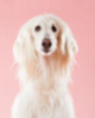 Dog on Pink