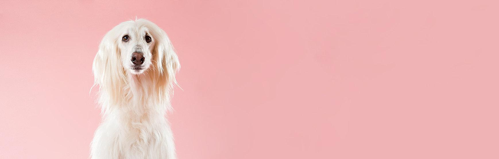 ピンクの犬