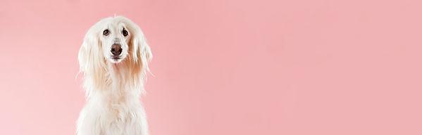 Cane sul colore rosa