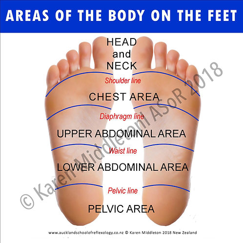 Areas of the Body on the Feet