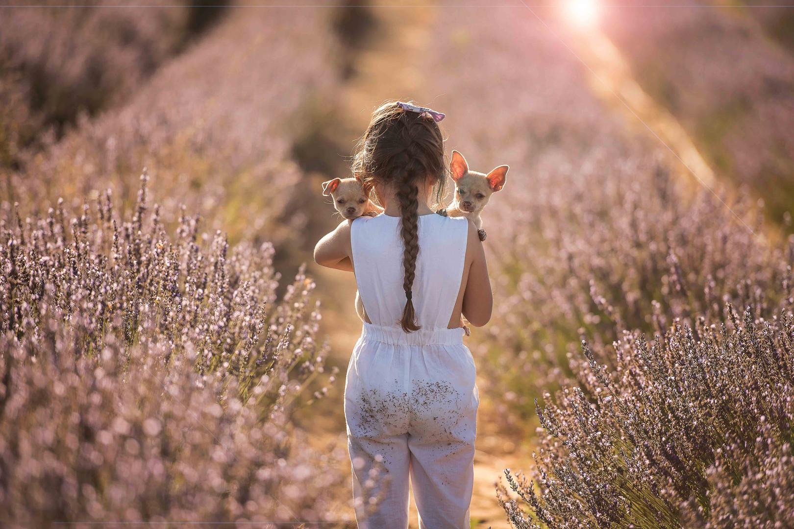 Yanchep lavender farm young girl with puppy, Perth WA