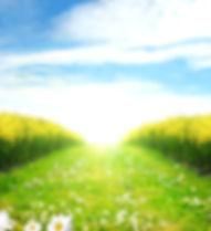 green-field-pathway-zelenoe.jpg