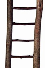 Natural Bird Ladder 30cm - 7 Rung