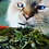 Thumbnail: Catnip - Herbal Cat Happiness