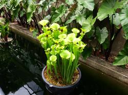 Botanic Gardens (10) - Day Trip.JPG