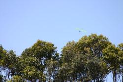 Narrabeen Hang Gliding (1).JPG