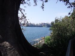 Botanic Gardens (4) - Day Trip.JPG
