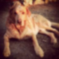 I nostri cani - Brando