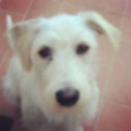I nostri cani - Pepe