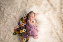 Plymouth Michigan newborn Photography--2
