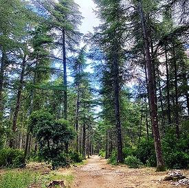 OB Forêt des cedres.JPG