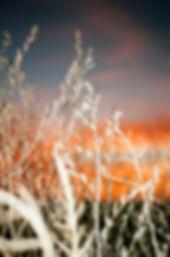 farmweeds.jpg