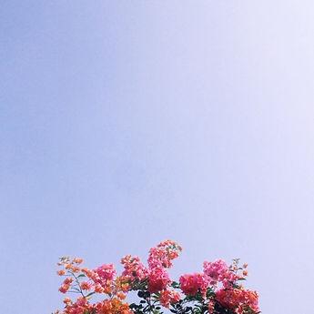 website flower.jpg