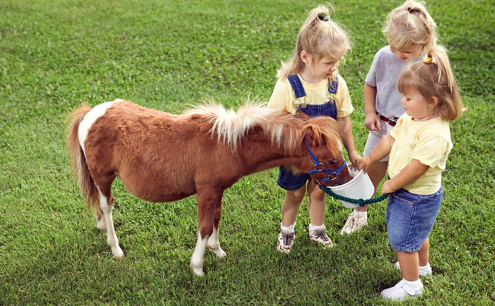 pony and children