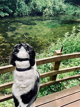 dog looking at a pond