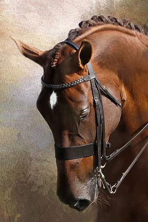 equine fine art portrait