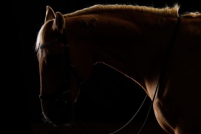 horses head and neck