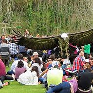 Exhibiciones de vuelo libre con aves rapaces