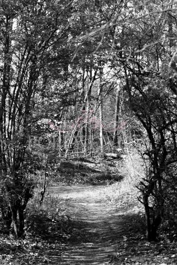 Landscape Photography by Poppy Fields Photography