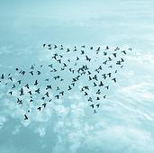 Birds on sky , growth development busine