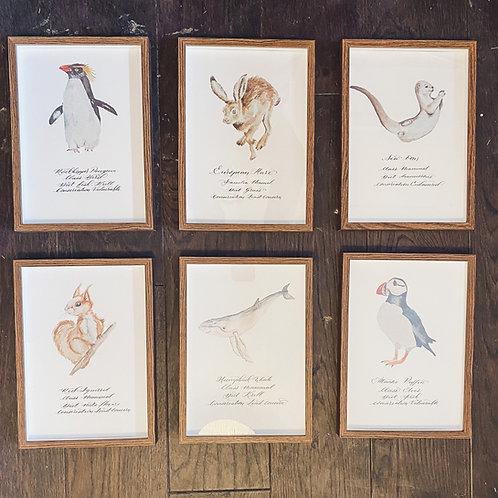 Set of 6 Animal prints