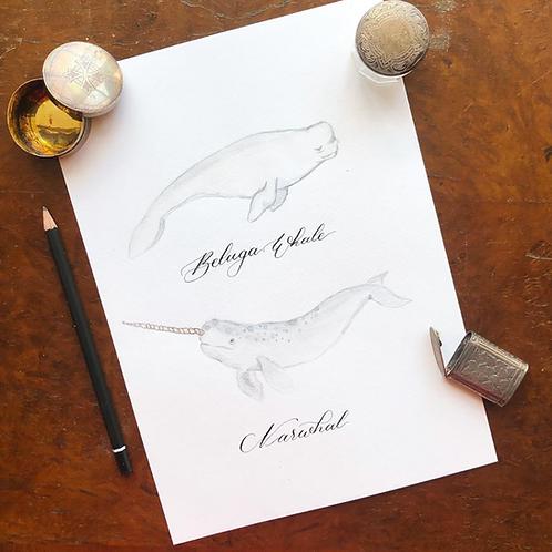 Whales Original