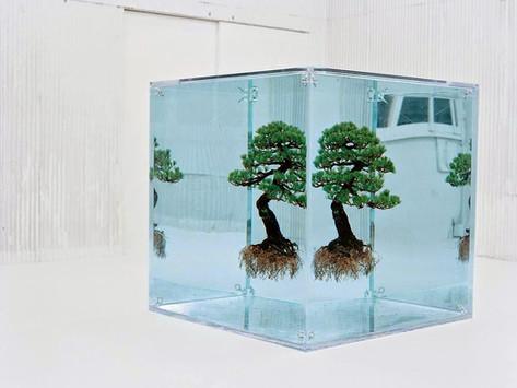 Azuma Makoto Tasarımı 5 Deneysel Botanik Heykeli
