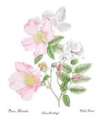 botanical to print.jpg