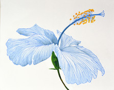 blue elegance.JPG