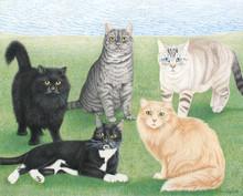 5 cats 162.jpg