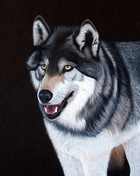 wolf on black.jpg