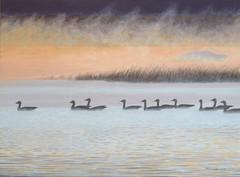 geese morning light 007.jpg