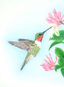 ws hummingbird.jpg